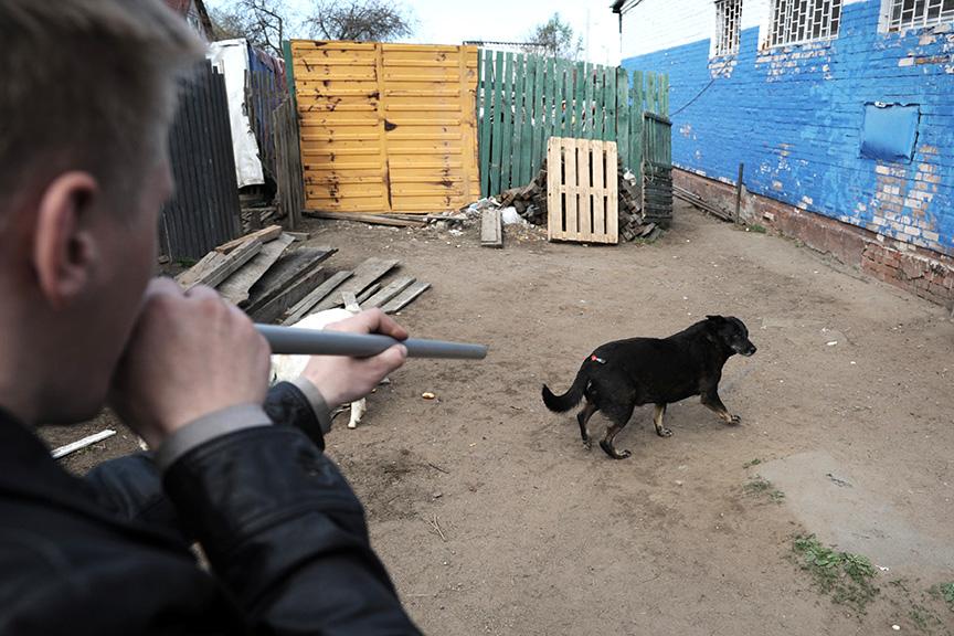 прокладки крышки бродячие собаки в волгограде куда жаловаться добрее всех свете