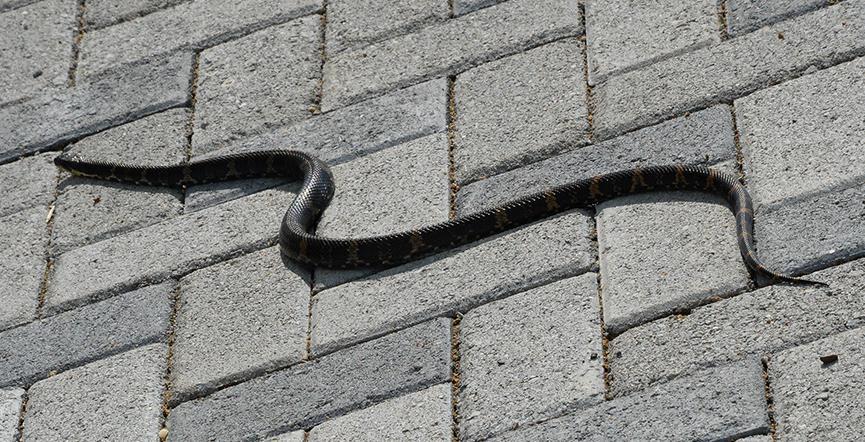 Бетон змеи цены на цемент в москве в мешках